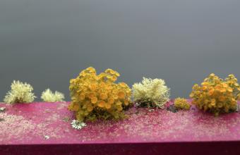 Mimi Cavalerie inauguró muestra en Galería de Arte UDD